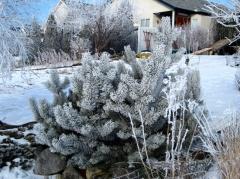 Manitoba February Frosty morning Photo by Bogdan Fiedur
